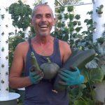 Zucchini on Tower Garden