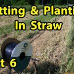 True NO TILL Homesteading Organic Vegetable Gardening with mulch for beginners 101.  Pt 6