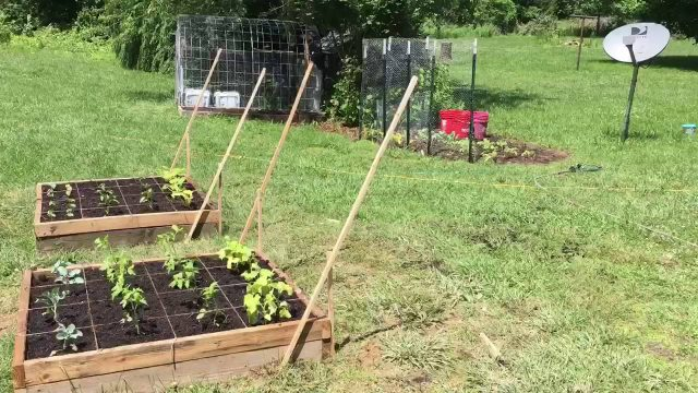 Cucumber and squash trellis (for under $10)