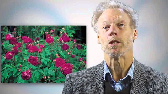 David Austin's Garden Roses Course