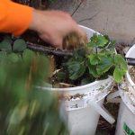 Gardening With Cody Week 7: Hydroponic System Online!