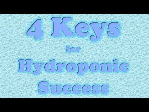 My 4 Keys for Hydroponic Success