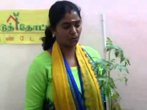 Home Vegetable Gardening %28 In Tamil %29