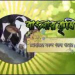 Banglar Krishi Episode no 280 (Roof Gardening Rajshahi+ Cattle Farming Dohar)