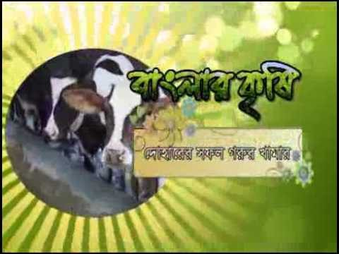 Banglar Krishi Episode no 280 (Roof Gardening Rajshahi+ Cattle Farming Dohar)