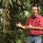 Perennial Vegetable Gardening DVD Trailer