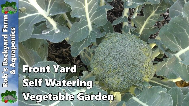Front Yard Self Watering Vegetable Garden & Fruit Trees