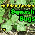 NO TILL B2E Method Organic Vegetable Gardening Soil Building with mulch for beginners 101.  Pt 7