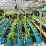 #2 Hydroponic Gardening – Grow Organic Plants Fast / Hydroponic growing in my house, Cambodia
