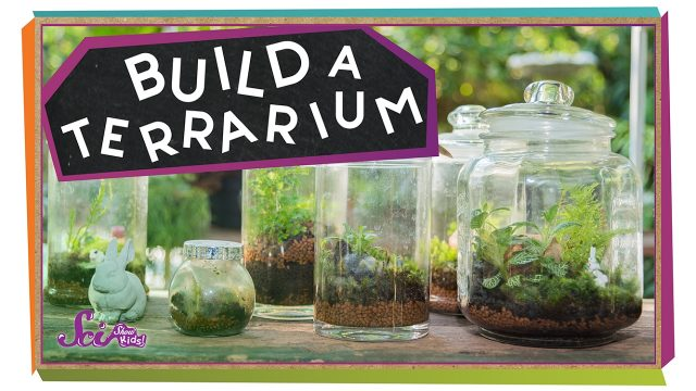 Build a Tiny Plant World!