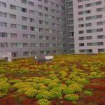 Washington DC Green Roof Rebate Program