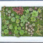 DIY – mit Sukkulenten bepflanzter Bilderrahmen  | Vertikaler Garten | Hängender Garten