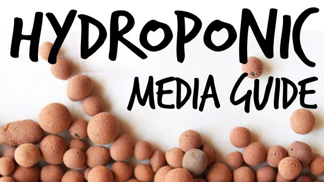 Hydroponic Media Guide: What Should You Use?