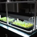 Hydroponic Seed Starting & Simple PVC Grow Light Stand