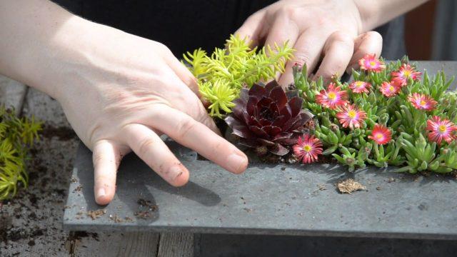Make A Miniature Succulent Wall Planter ✽ || West Coast Gardens
