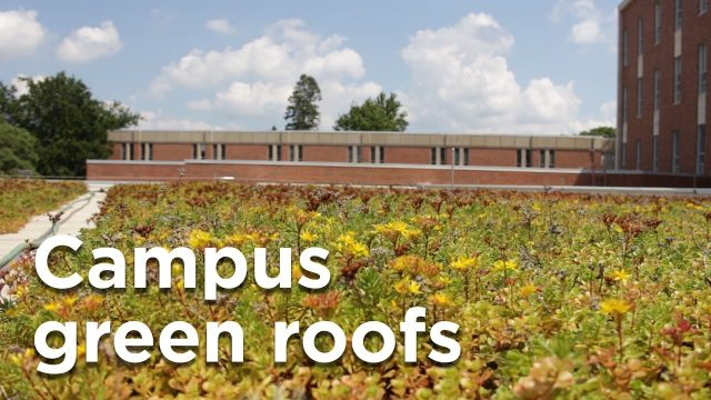 Campus green roofs