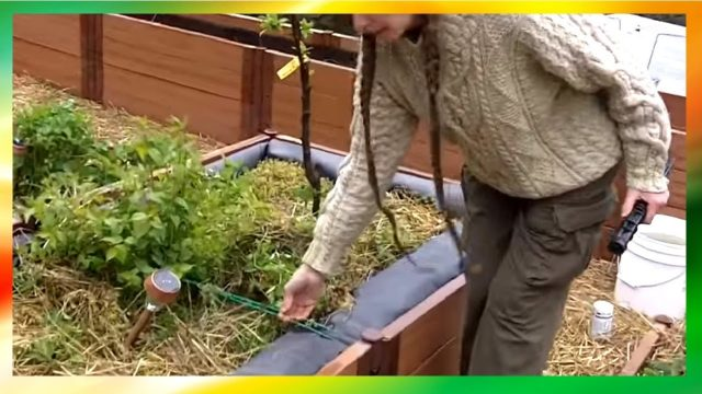 Solar Powered Rooftop Garden Design (Owners Share Practical Tips And Tricks)