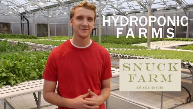 Snuck Farm – Seeding Process for Hydroponic Farm
