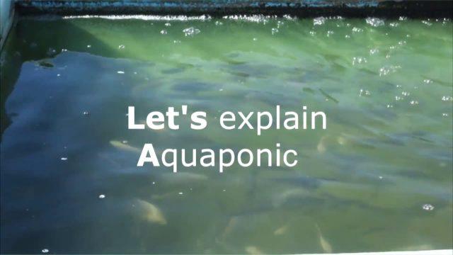 HYdroFarm définition – Aquaponic + Hydroponic
