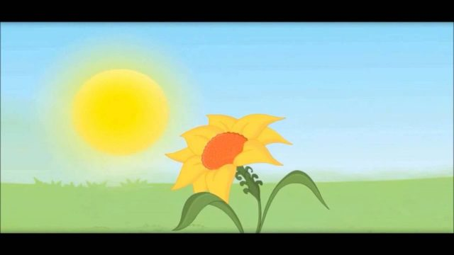 Plants Show Movement -Sunflower, Touch Me Not -Kids School Education Video