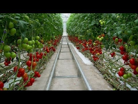 Mordern Agriculture technology 2017 – Best Farm the World