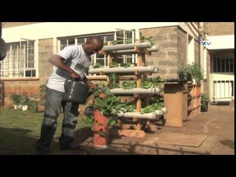 Nairobi farmer taps into potential of hydrophonics