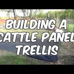 Cattle Panel Trellis For My Spaghetti Squash