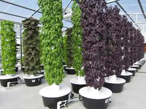 Growing on the Aeroponics System
