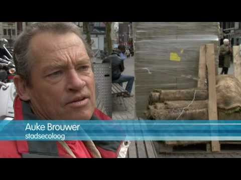 Dakdokters: ABC Amsterdam's green roof