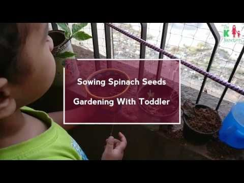 Benefits Of Gardening With Toddler (Sowing Spinach Seeds) – The K Junction