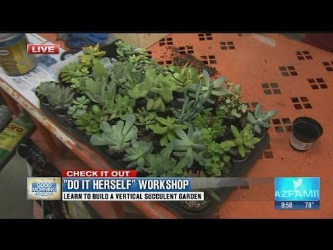 Learn to build a vertical succulent garden (part 2)