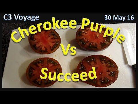 Cherokee Purple vs Succeed