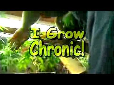 I Grow Chronic! Cannabis Hydro Cultivation (Full Tutorial)