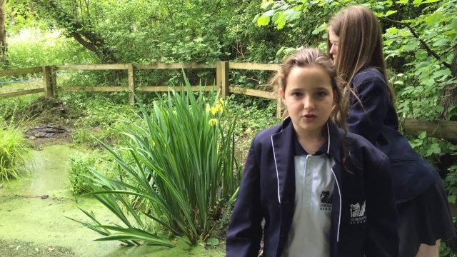 RHS School Gardening Team of the Year 2016 – Gordano School (Finalist)