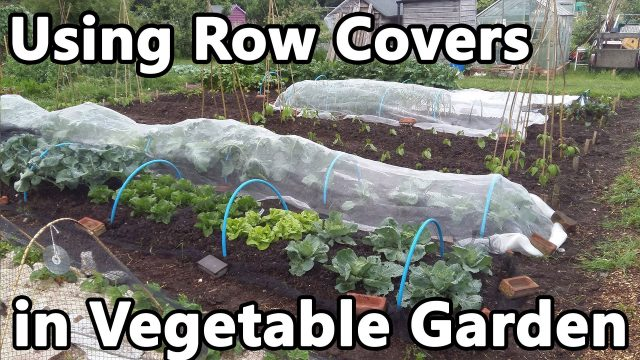 Using Row Covers in Vegetable Garden – fleece, enviromesh, veggiemesh, insect and bird netting