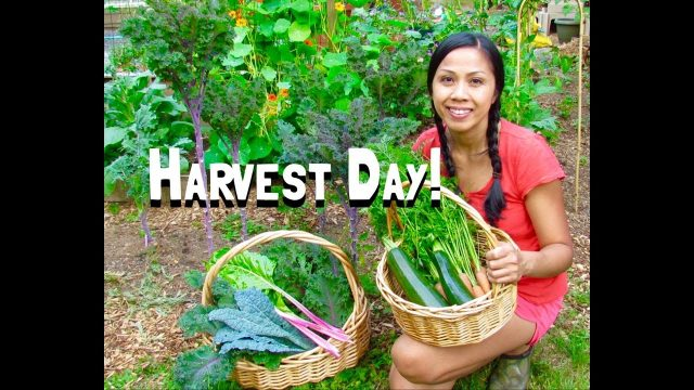 Summer Harvest – Kids in the Garden PNW 2017