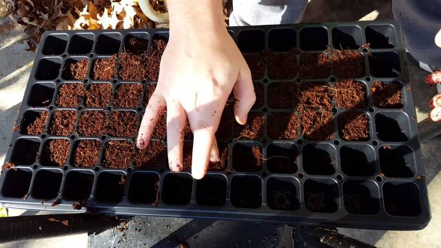 How to start seeds with coco coir indoor gardening
