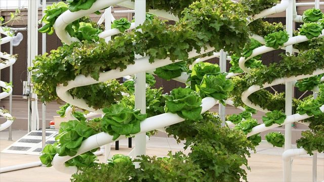 Hydroponic Kits Used In Aeroponics System – Nutrient Solution