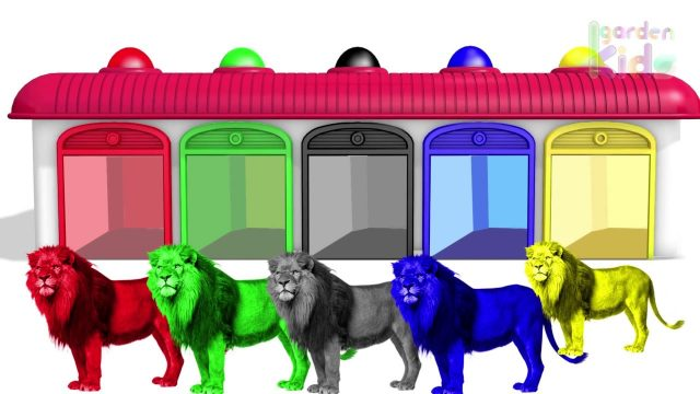 Finger Family w Lion King Colours ! Learn Color Video for kids! Garden Kids TV #2