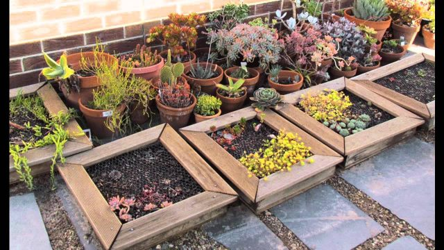 Home vertical garden succulents