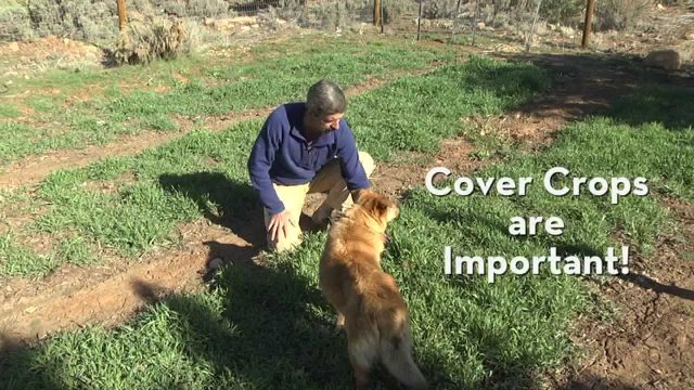 Use Cover Crops in your Vegetable Garden to Grow Food Well!