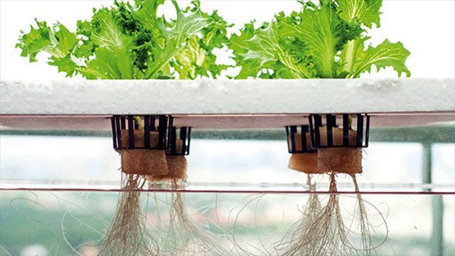 Hydroponic Kits And Its Different Kinds – Water Culture, Aggregate System, Aeroponic