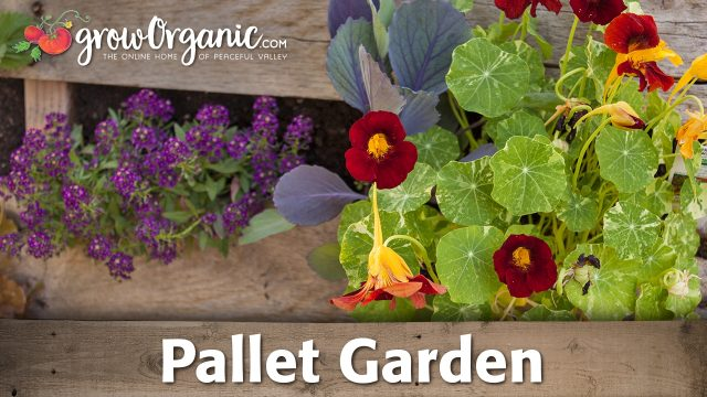 How to Make a Trendy Pallet Garden For Cheap!