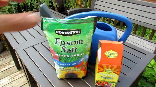 Container Vegetable Gardening: Using Epsom Salt, Fertilizer, My Mid August Routine
