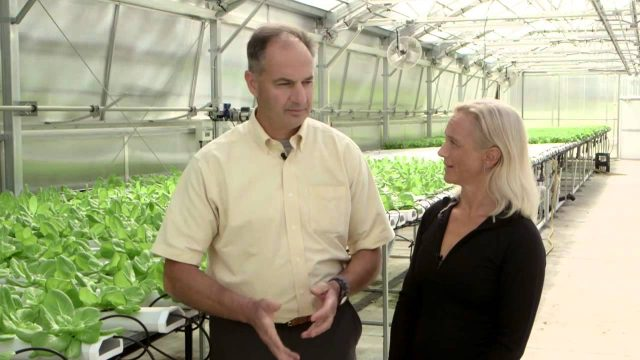 Hydroponics at Donabedian Farms