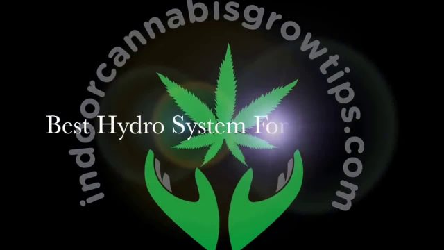 how to grow Cannabis in Hydroponic for Beginners