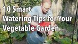 10 Smart Watering Tips for Your Vegetable Garden