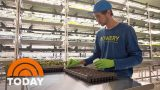 Vertical Farming Is Revolutionizing How Food Is grown In America | TODAY