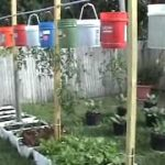Upside Down Hanging Vegetable Garden — Containers, Plastic Drums, Bags, and Toilets