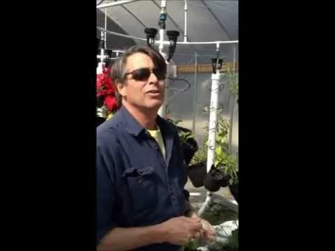 Hydroponic or Organic High Yield Vertical Growing